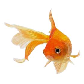 3 Permintaan Puan Lolo kepada Jin Ikan