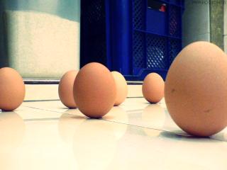 Telur Berdiri Tegak ketika Gerhana Bulan